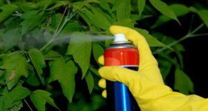применение фунгицидов для винограда