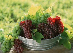 чем отличаются столовые сорта винограда