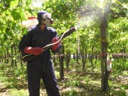 обработка винограда осенью от болезней