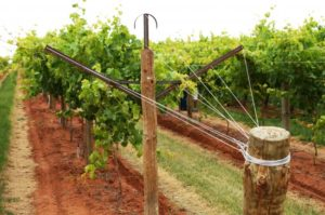 шпалера для винограда дома