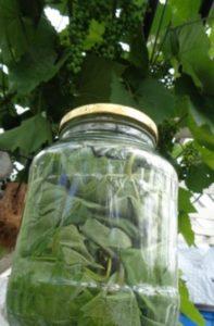чай из листьев винограда