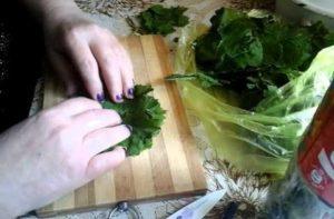 заготовка листьев винограда