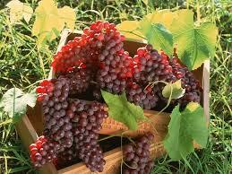 список сортов винограда