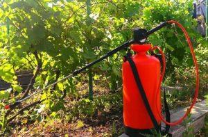 обработка против болезней винограда