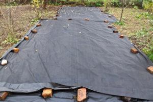 укрытие винограда спанбондом на зиму