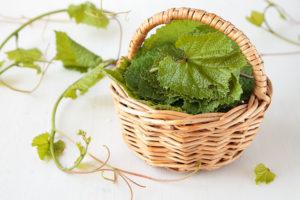 виноградные листья в кулинарии