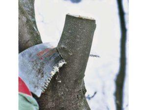 обработка волчков груши